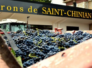 saint-chinian-vendanges
